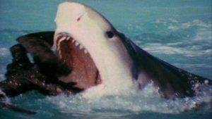 Vreemd duel: albatros tegen haai