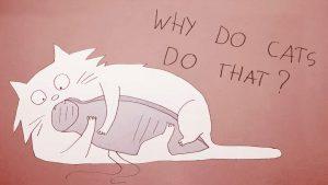 Waarom een kat doet wat-ie doet