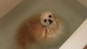 Honden met waterangst, zielig!
