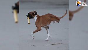 Duncan, de hond met twee poten